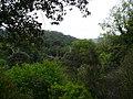 Prop del camí de Can Bosquets P1240421.jpg