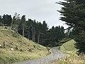 Pukeora Forest.jpg