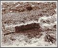 Pumice section. Eskifjörður. (4558878460).jpg