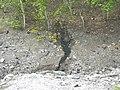 Quarry of the Ancestors Sep 2009 186 (5643945514).jpg