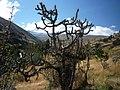 Quebrada Pariac - panoramio (1).jpg