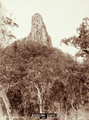 Queensland State Archives 5110 Mt Coonowrin 1160 Ft c 1894.png