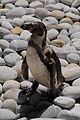 Quinta Santo Inacio - Pinguin.JPG