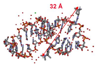 Acidi ribonucleici
