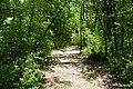 RNR Bois des Roches-3 (36).jpg