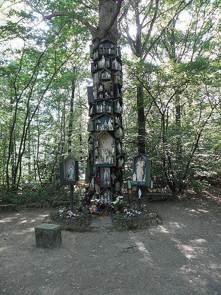 Chêne à la Vierge, à Rannée (35).