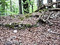 Restes de la muraille ouest de l'ancien château.jpg