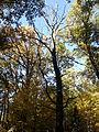 Rezerwat przyrody Dęby w Meszczach 12.50.jpg