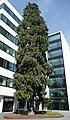 Riesenlebensbaum (Gebrüder Ulmer).jpg