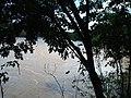 Rio Jaguari - chacara pingueiro - Itapavossu - panoramio - Anderson Martins (6).jpg