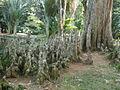 Rio de Janeiro Botanical Garden16.JPG