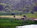 River Nile 14.jpg