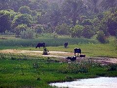 Champs cultivés au bord du Nil