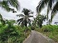 Road to Mitsamiouli beach.jpg