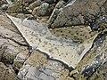 Rock Pool - geograph.org.uk - 189139.jpg