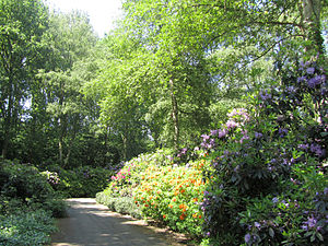 Amstelpark - Rhododendron garden in the Amstelpark
