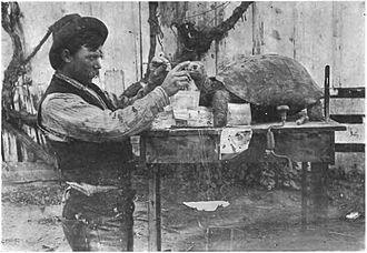 Rollo Beck - Beck preparing a taxidermy mount of a Galápagos tortoise