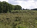 Rough pasture near Rutleigh Ball - geograph.org.uk - 494466.jpg