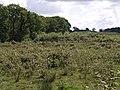 Rough pasture near Rutleigh Ball - geograph.org.uk - 494466.jpg