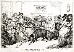 Rowlandson, The Wonderful Pig, 1785.JPG