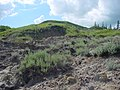 Sagebrush on the Valley Slope - panoramio.jpg