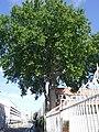 Saint-Denis.Rue des Gardinoux.2020.DSCF0849.jpg