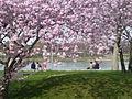 Sakura-Rheinufer-Sued-04.JPG