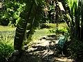 San Juan Botanical Garden - DSC07001.JPG