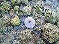 Sao Tome Shell 1 (16063180767).jpg
