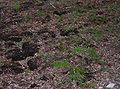 Satzer Moor Torflager trocken.jpg