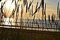 Saulgriežu iela 10, Ziemeļu rajons, Rīga, LV-1030, Latvia - panoramio (6).jpg