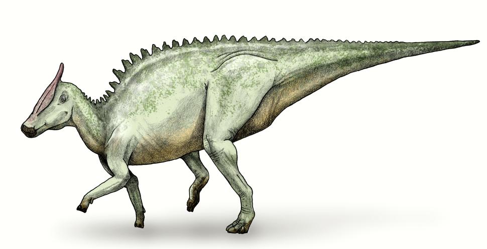 Saurolophus debivort