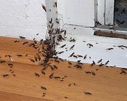Bekämpfung von Ameisen – Ameisenwiki