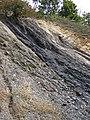 Semi-anthracite coal (Merrimac Coal, Lower Mississippian; Cloyds Mountain roadcut, Valley Coalfield, Virginia, USA) 6 (30377969582).jpg