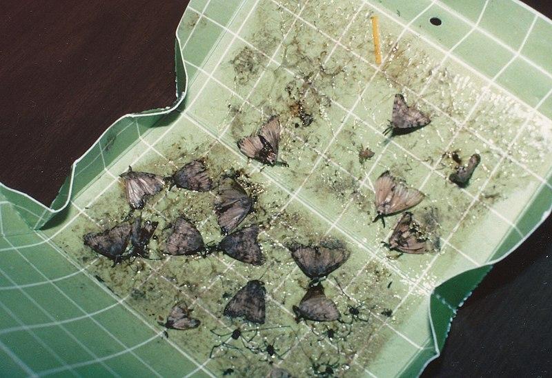 File:Seney National Wildlife Refuge - 1991 (5405008862).jpg