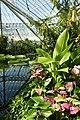 Serre Victoria-Jardin botanique Meise (2).jpg