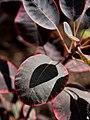 Shadow Leaf (61510363).jpeg