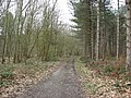 Sherwood Forest - The Sarts - geograph.org.uk - 729971.jpg