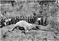 Shot elephant.jpg