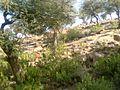 Shri Goverdhan Maharaj - panoramio.jpg