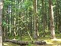 Sichuan forest.jpg