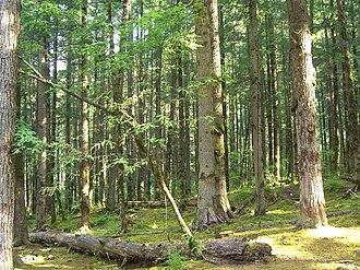 Eastern Asiatic Region - A forest in Sichuan
