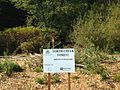 Sign and restoration area in the King County portion of North Creek Forest 01.JPG