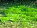 Silent Pool Vegetation - geograph.org.uk - 589138.jpg