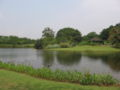 Singapore Botanic Gardens, Eco-lake 9, Sep 06.JPG