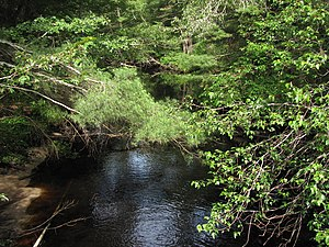 Sippican River - Downstream from Country Road between Wareham and Marion
