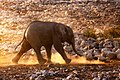 Small Elephant With Dust (227631863).jpeg