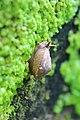 Snail al.jpg