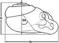Snail shell morphometrics - ZooKeys-287-041-g001.jpeg