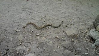 File:Snake on Yosemite Falls Trail.ogv